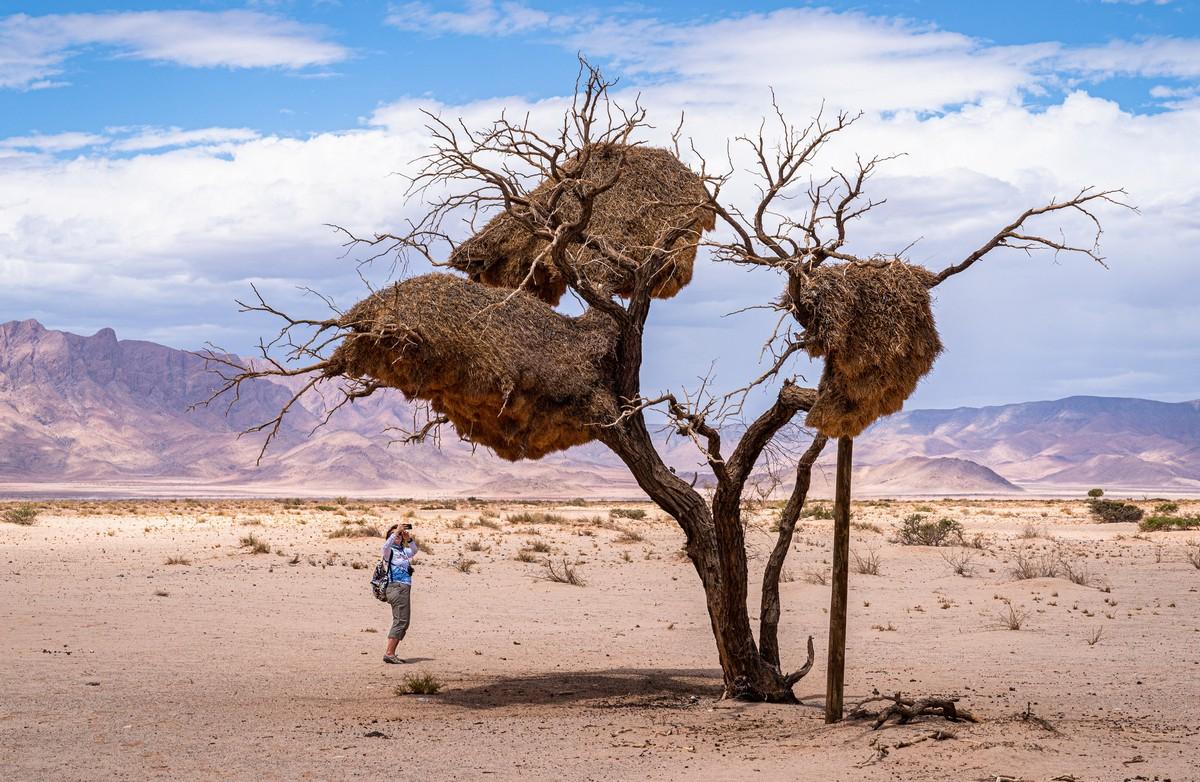 Африканская фото-декомпрессия: сотня фоток на сладкое. DSC03296