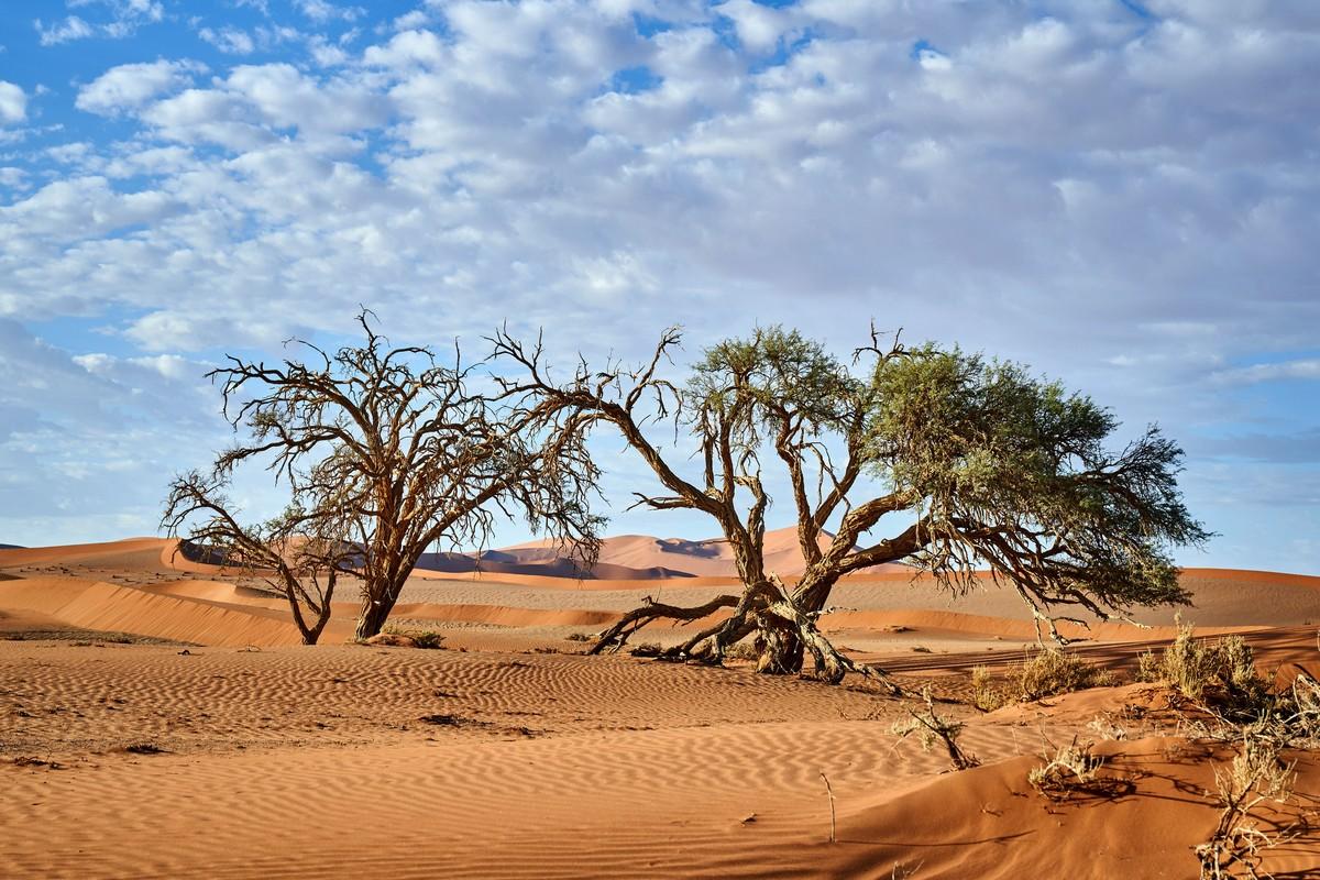Африканская фото-декомпрессия: сотня фоток на сладкое. 2DSC03069