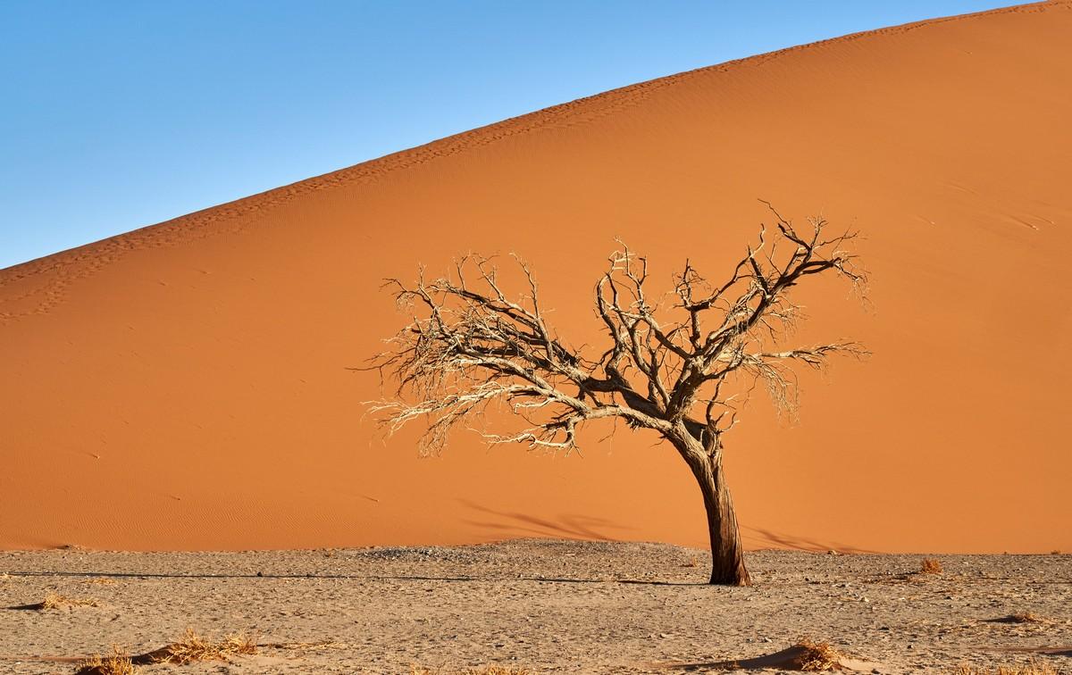 Африканская фото-декомпрессия: сотня фоток на сладкое. DSC03397