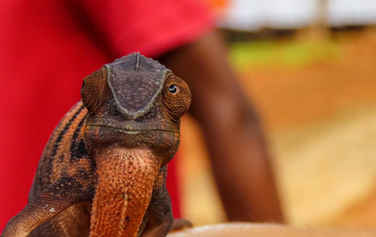 Африканская фото-декомпрессия: сотня фоток на сладкое. img_2495