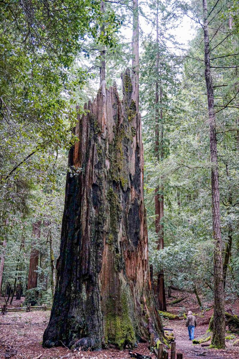 09-redwoods2