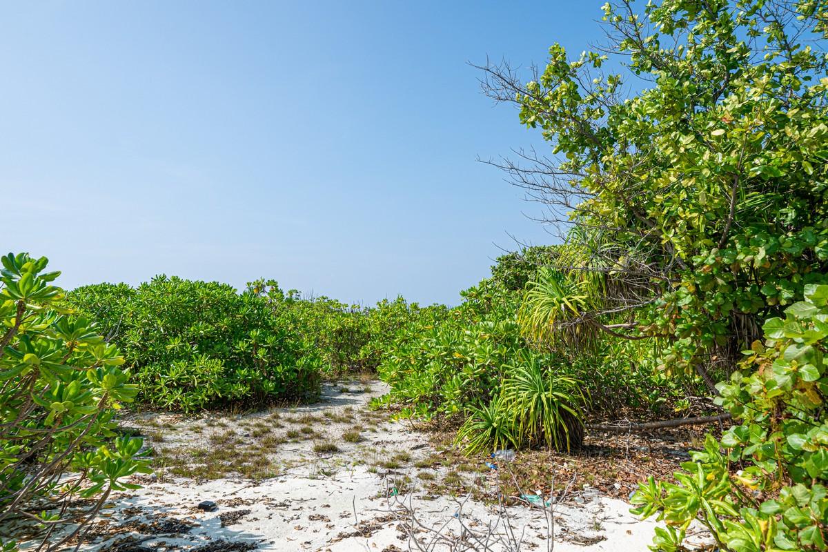 Острова везения в океане есть, практически (с) DSC07130