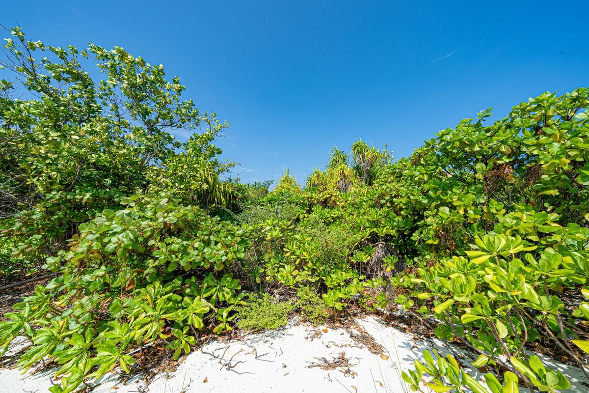 Острова везения в океане есть, практически (с) DSC07131