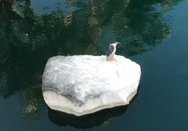 Жизнь - это плаванье  в дальние края...
