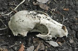 skull-creekwoods146