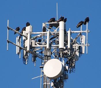 turkey-vultures-tower10-04-14-024