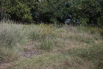 grass-garden-10-10-14-D80
