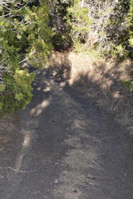 North-trail-diff-turn3-12-15-14