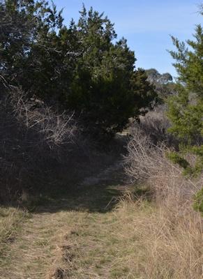 dry-woods-Fox-Pav trail