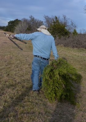 Bringing-home-tree-12-22-14