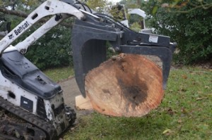 Ash-Xsection-of-trunk