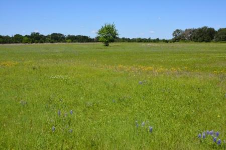 Lg-main-grass-4-22-2016