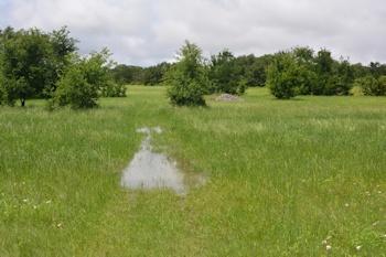 Near-meadow-aft-4-18-16