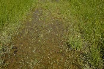 Near-meadow-water-4-22-16