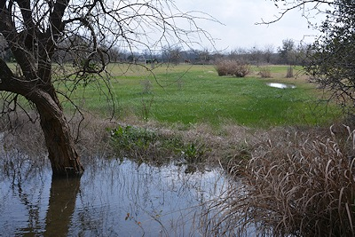 Near-meadow-drainage-2-27-17