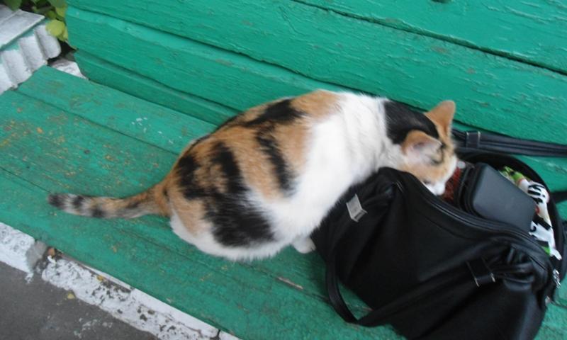 Муся в сумке