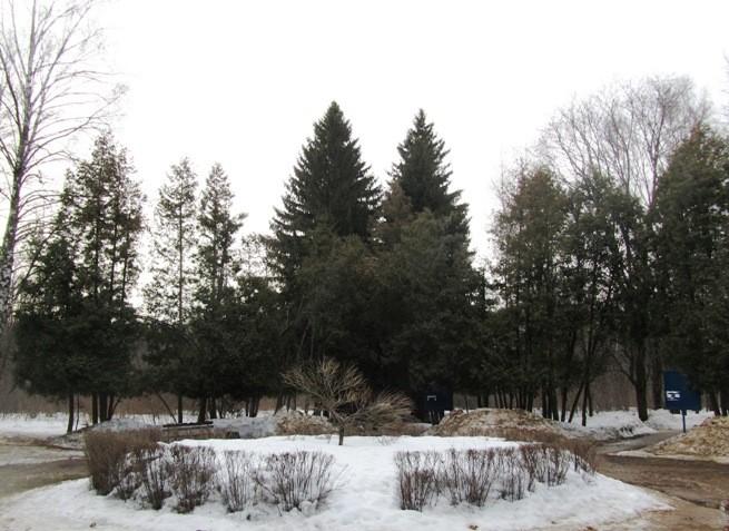 irina-fortuna-dendropark 14