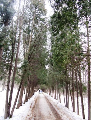 irina-fortuna-dendropark 19