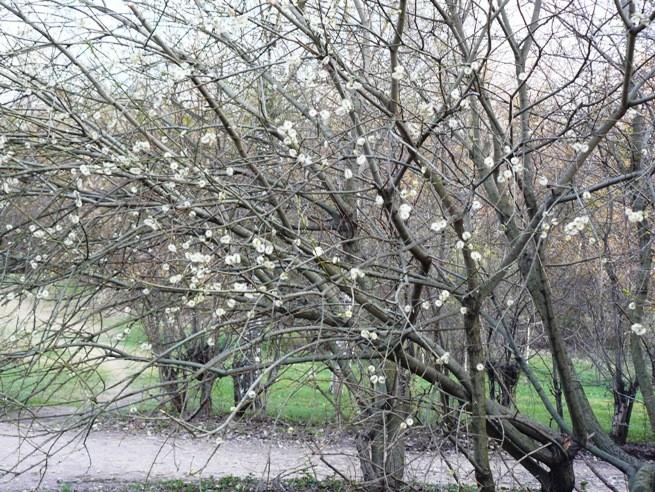 irina-fortuna-april