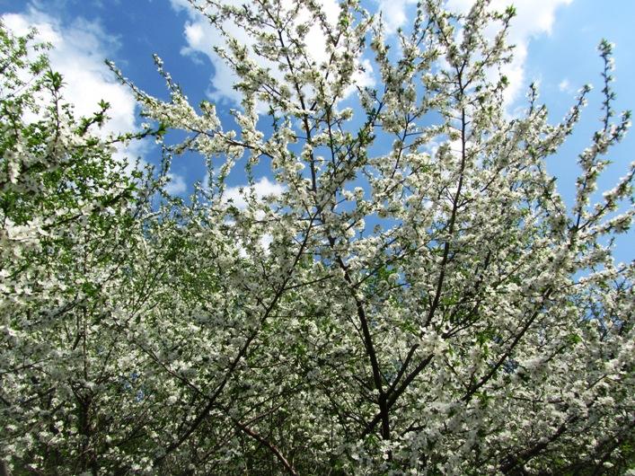 irina-fortuna-spring 02