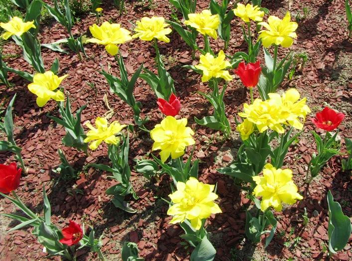 irina-fortuna-spring 04