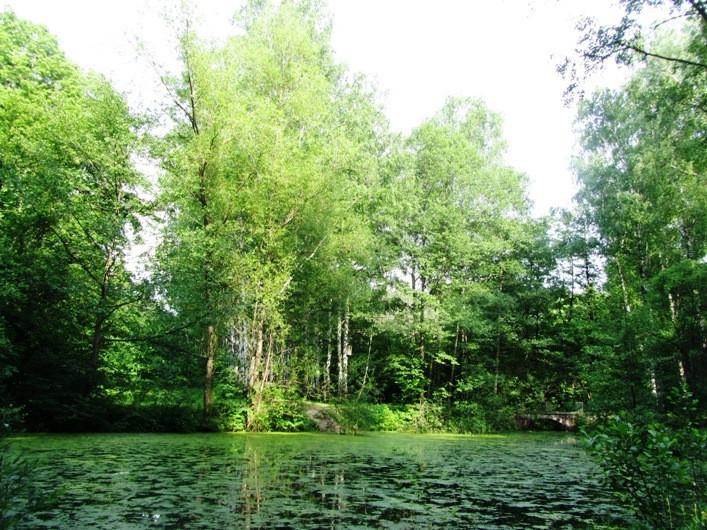 irirna-fortuna-dendropark 205