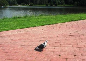 irina-fortuna-tsaritsino-birds 10