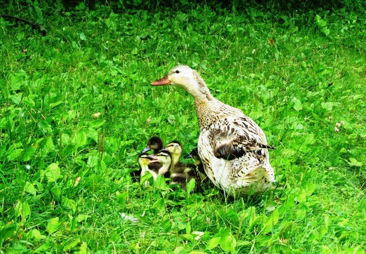 irina-fortuna-tsaritsino-birds 11