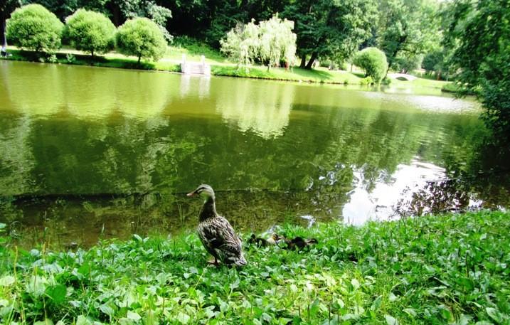 irina-fortuna-tsaritsino-birds 12