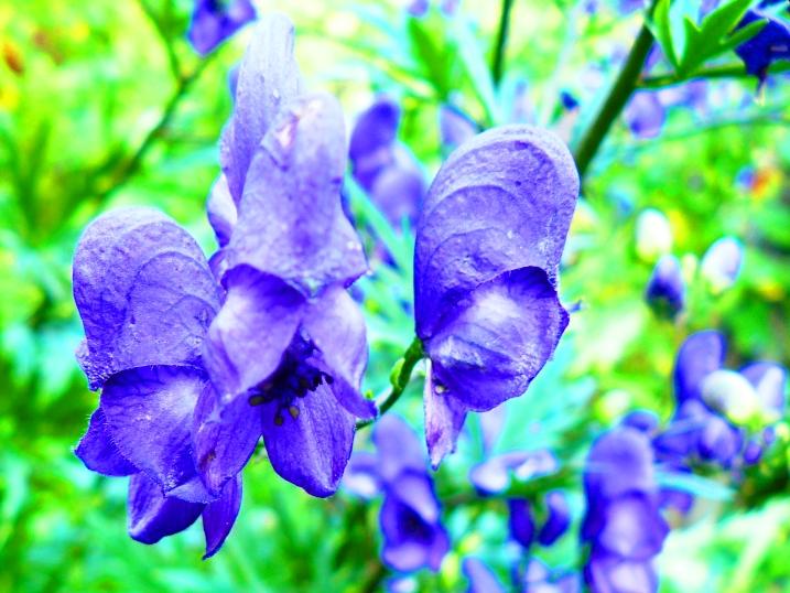 irina-fortuna-flowers 01