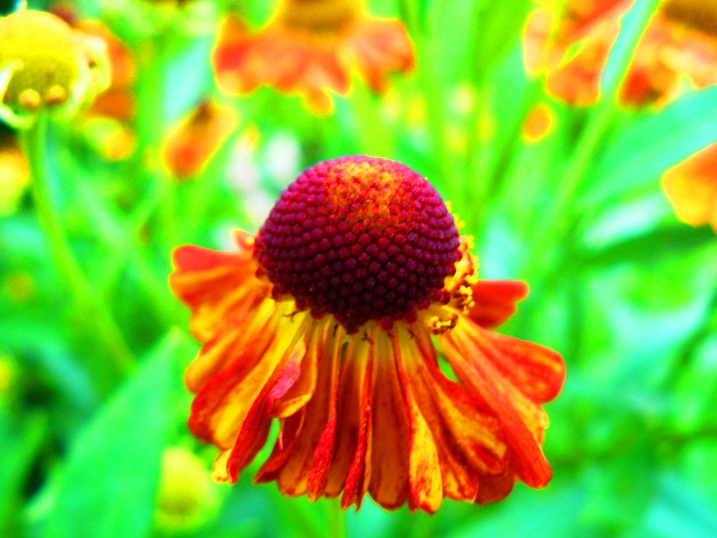 irina-fortuna-flowers 03