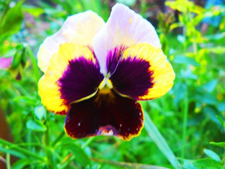 irina-fortuna-flowers 04