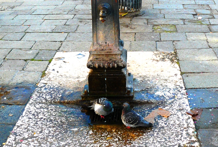 irina-fortuna-Venice-san-marco 12