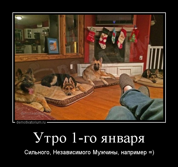 demotivatorium_ru_utro_1go_janvarja