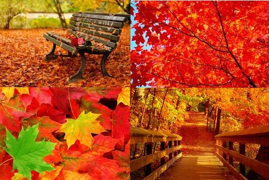 autumn4