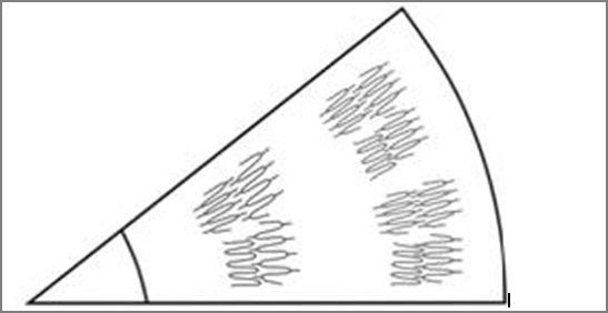 строение крахмального зерна