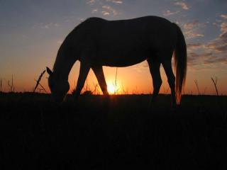 A horse, a sunset