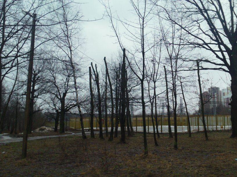 Kronirovanie-park-Tolstogo