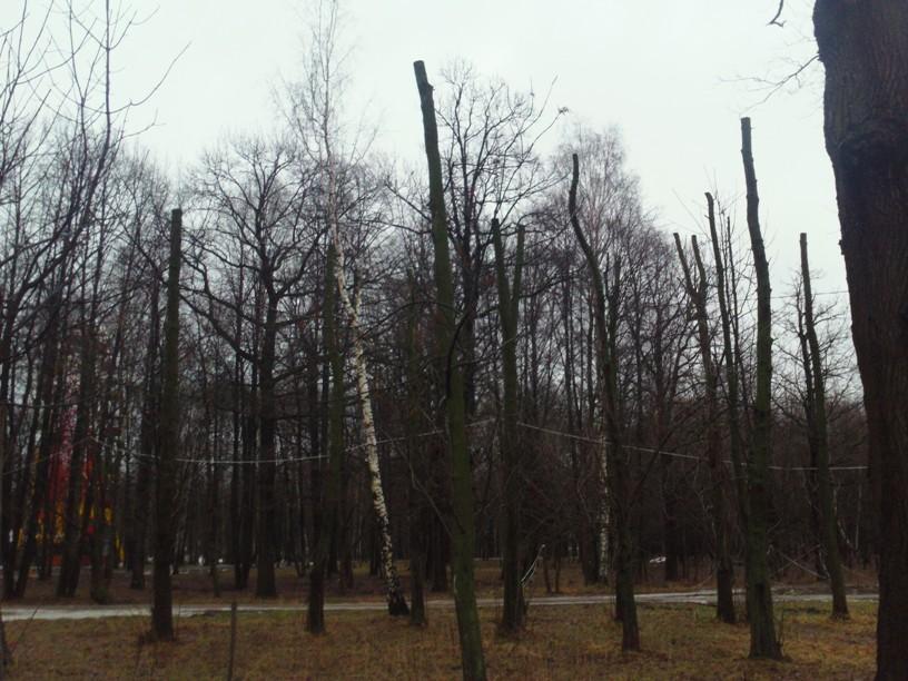 Kronirovanie-park-Tolstogo2