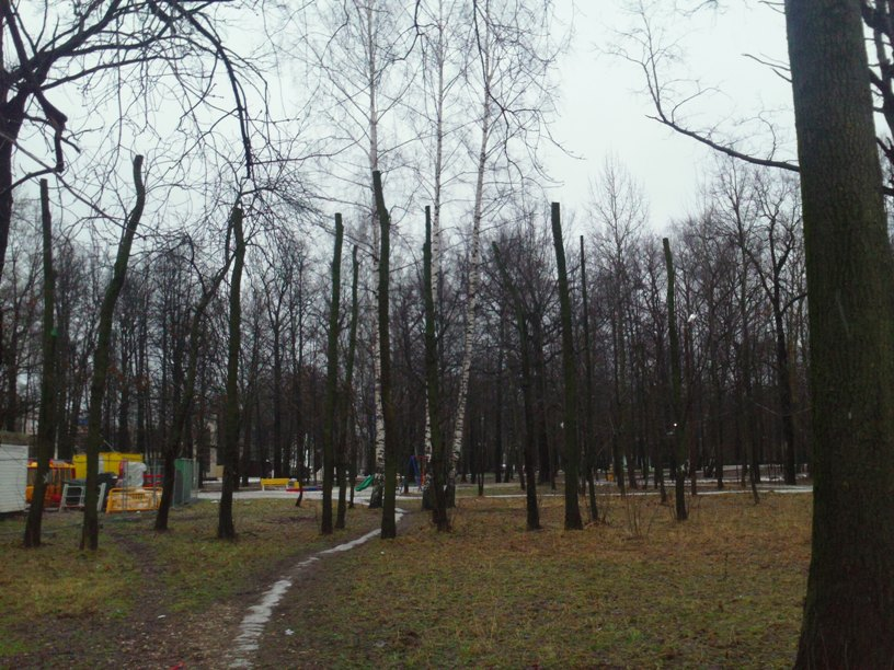 Kronirovanie-park-Tolstogo3
