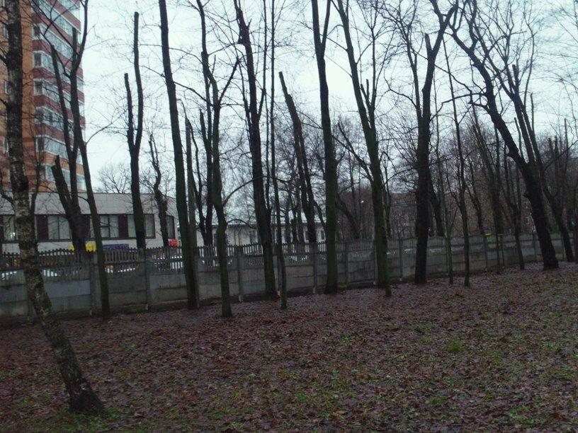 Kronirovanie-park-Tolstogo4