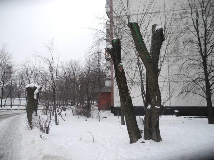 Vyrubka01-2014-3