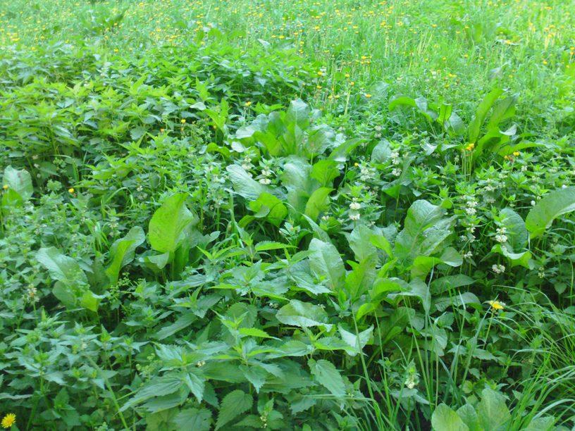 05-2014 газон трава 2