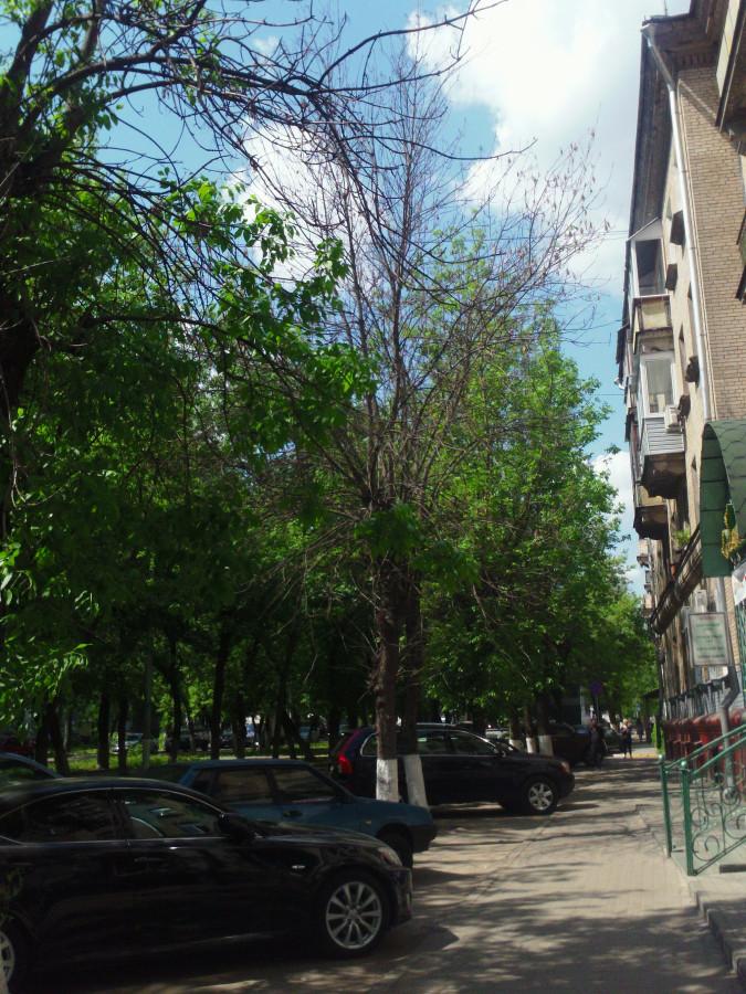 Деревья засохли