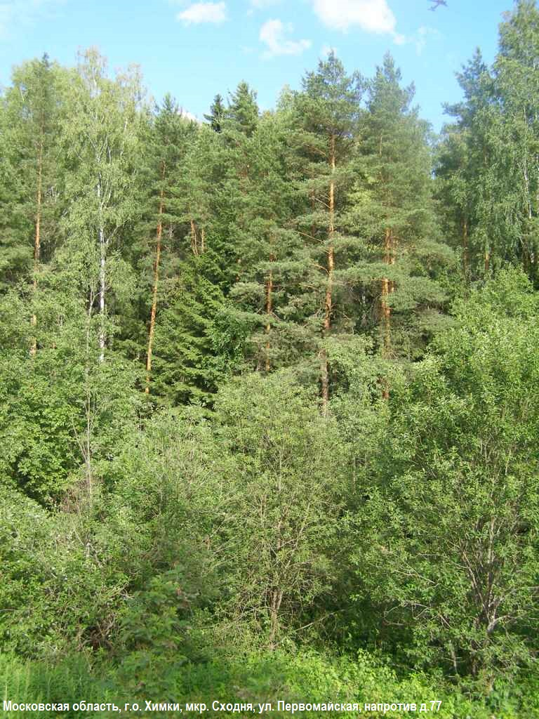 07-2014-лес 4