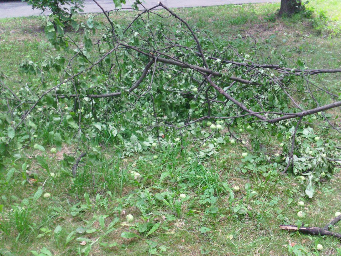 Яблони вырублены 5