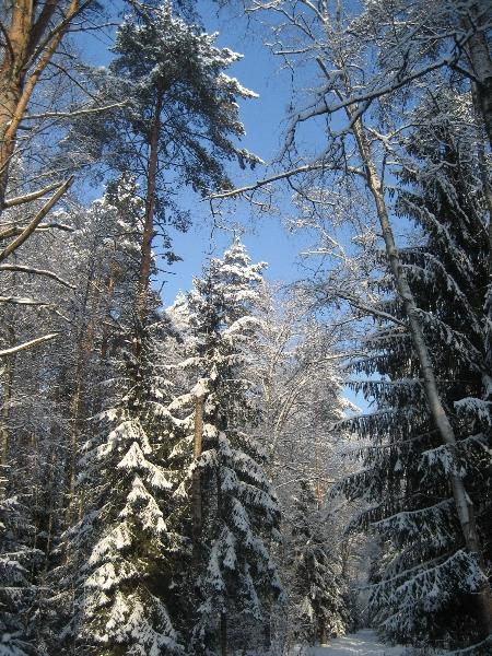 Сел лес