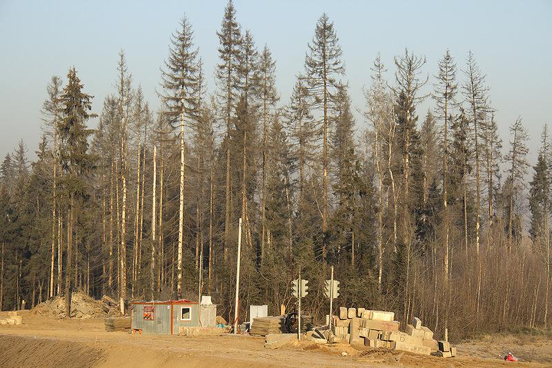 Лес вдоль трассы2