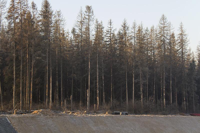 Лес вдоль трассы3