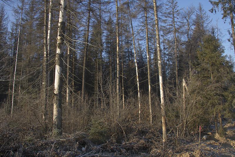 Лес вдоль трассы4